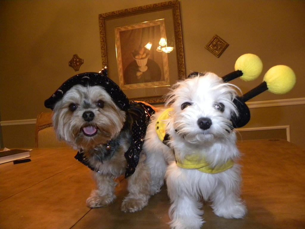 Good Dog Costumes For Halloween