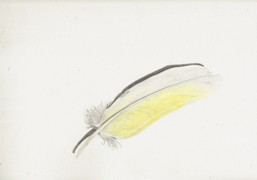 02nov12 Cockatoo Feather I Was Pleased With The Drawing