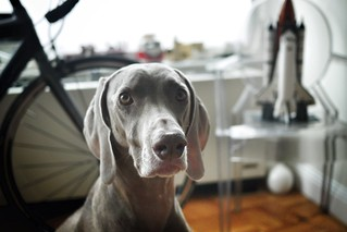 Madison #superweim | by Michael Surtees