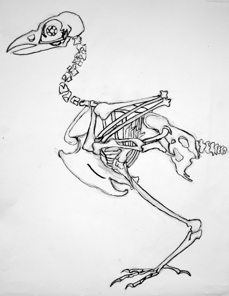 Machines: crow anatomy | size:40X30cm Ink drawing from my sk… | Flickr