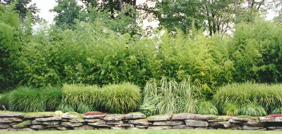 ... Bamboo And Ornamental Grass Garden, Landscaping And Garen Design In  Saddle River, Bergen County