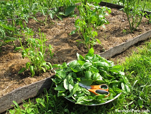 Go Green To Save Money - Growing Your Own Fresh Herbs (4) | by Farmgirl Susan