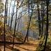 Oct25-Trail2b
