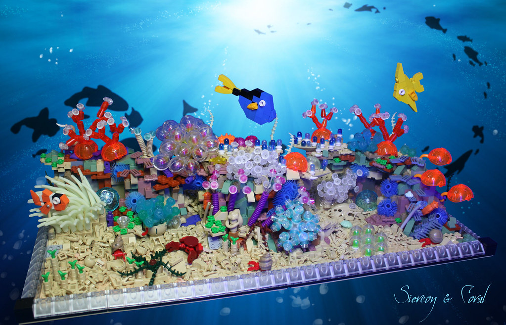 Coral reef welcome to our coral reef this is actually for Finding a builder