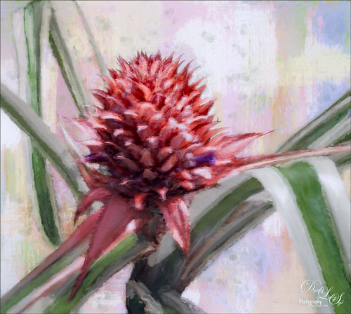 Painted Image of a Red Bromeliad