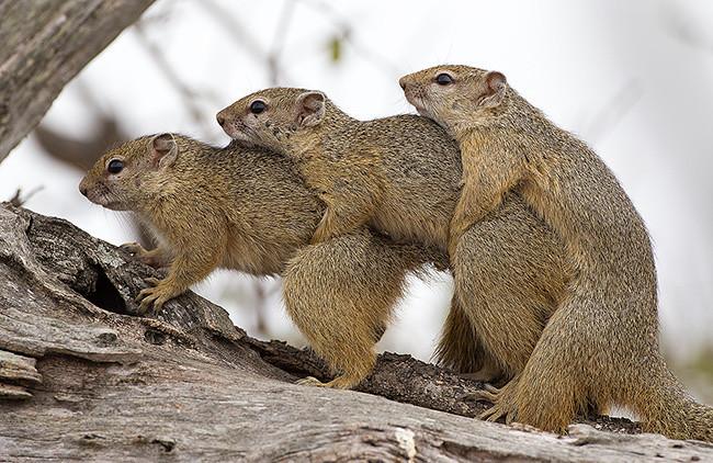 Wannna yahoo photo threesome