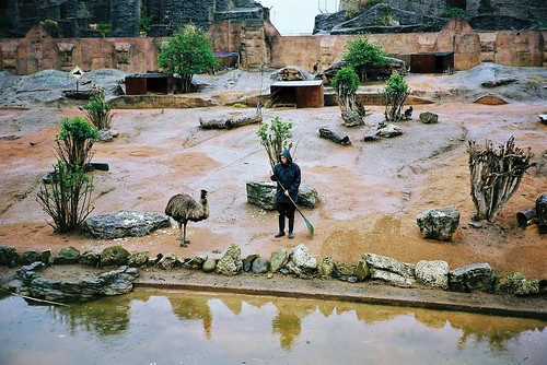A wet Rhea and a wet Reah keeper at loggerheads in the rain | by deepstoat