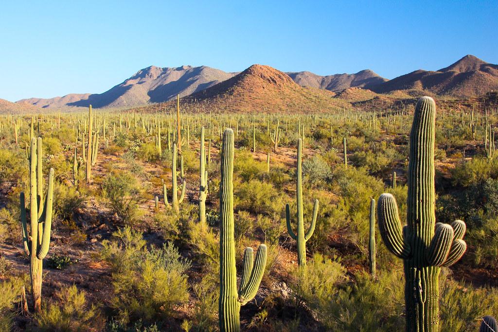 Saguaro National Park | Joe Parks | Flickr