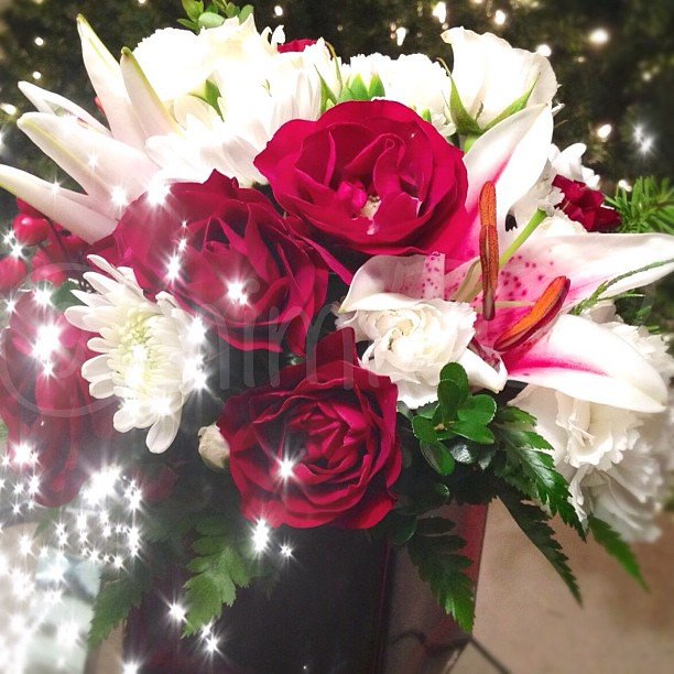 My Christmas Flowers Are Blooming So Pretty Roses L