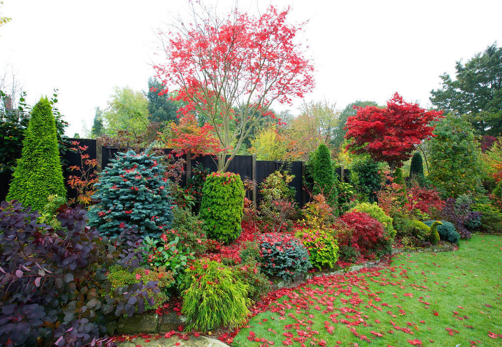 Autumn leaves of acer palmatum 39 trompenburg 39 are quickly f for Gardening 4 all seasons