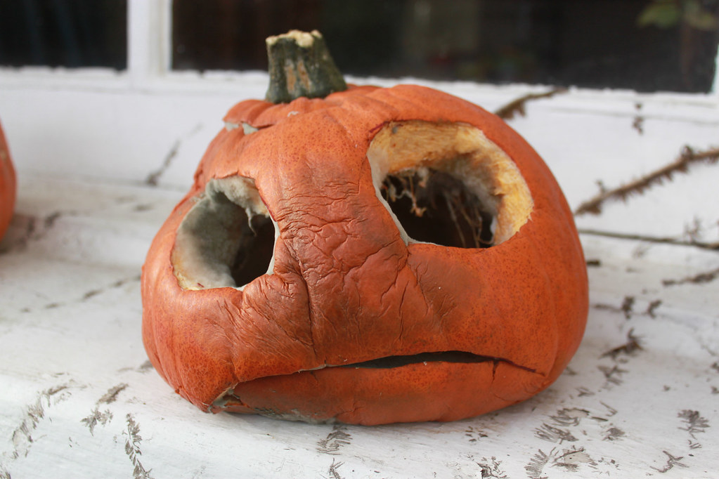 Image Result For Images Of Pumpkin