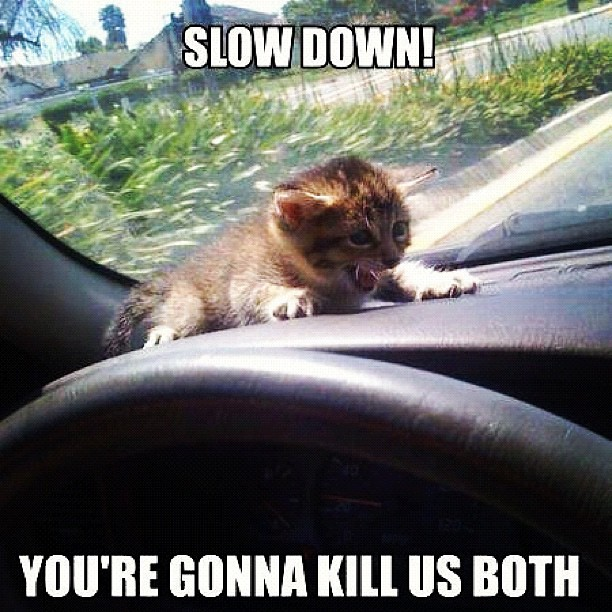 Slow Down You Re Gonna Crash Cars