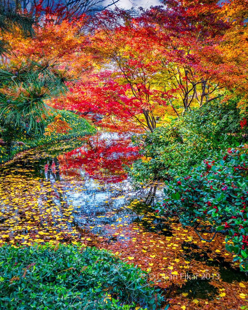 Japanese gardens unbelievable colors yesterday dfikar for Japanese garden colors