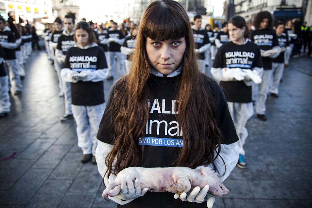 DIDA 2012 | Fotografía: Luis Tato | Igualdad Animal | Animal ...