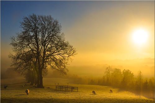 Early Morning at Bodenham