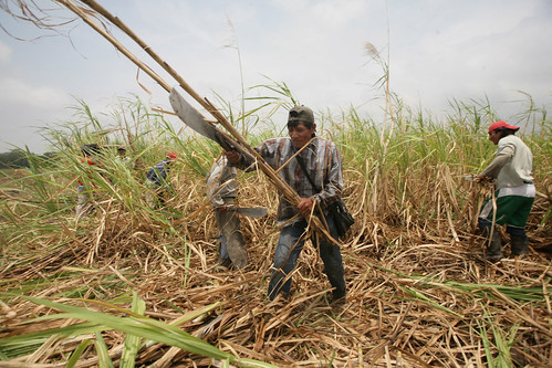 Bolivian sugar cane cutters at work. Credit: Gastón Brito/IPS | by IPS Inter Press Service