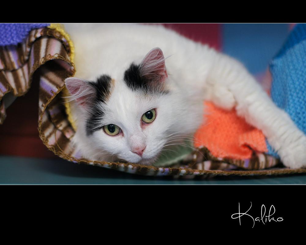 Cat Rescue Van Buren