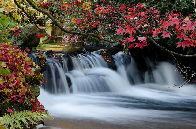 Stobo japanese water garden flickr photo sharing for Stobo water gardens