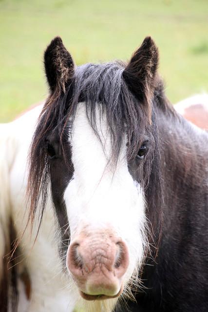 Hello Mr Horse