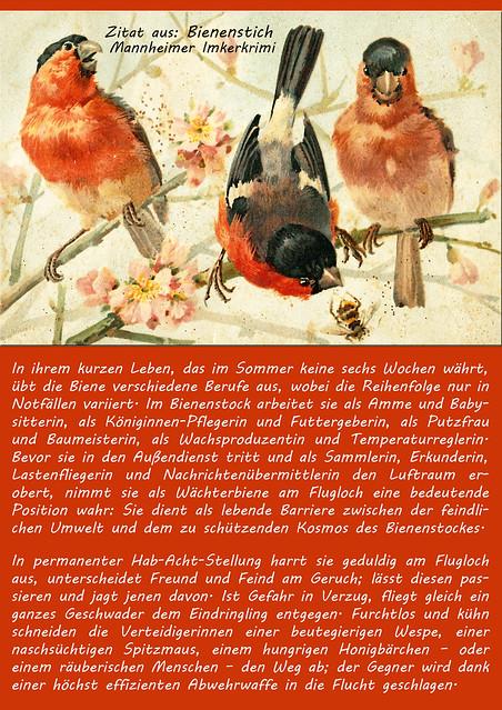 """Honig, Bienen, Imker ... Bienenstich - Imkerkrimi aus Mannheim von Brigitte Stole ... Zitat für """"Bienenberufe"""" ... alte Postkarte mit Vögeln und Biene"""