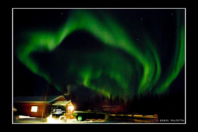 raven vet clinic north pole alaska flickr   photo sharing
