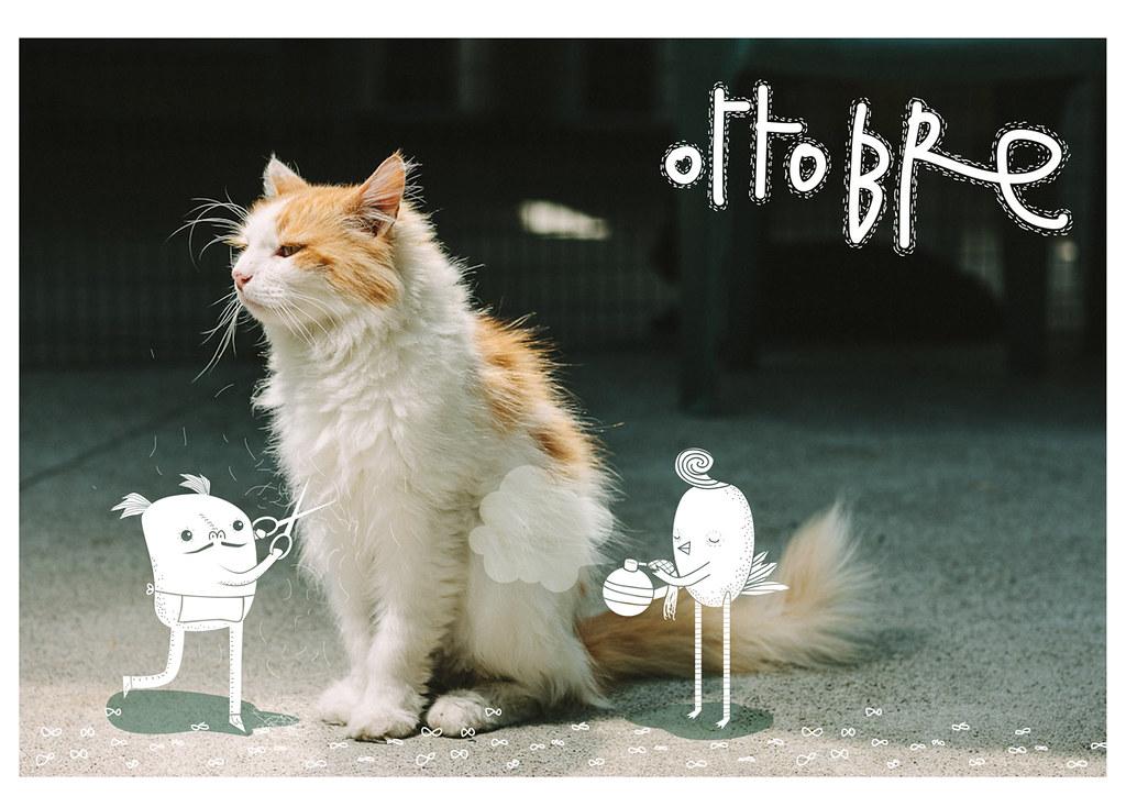 Calendario 2013 Mondo Gatto Ottobre Wwwfacebookcomno Flickr