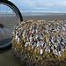 biking for barnacles
