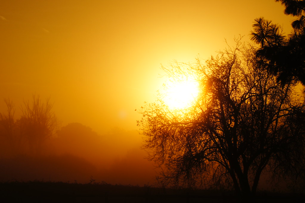 Early morning sun. | whitechairphotography | Flickr