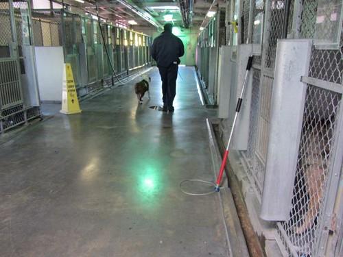 Dog Walking Company Insurance