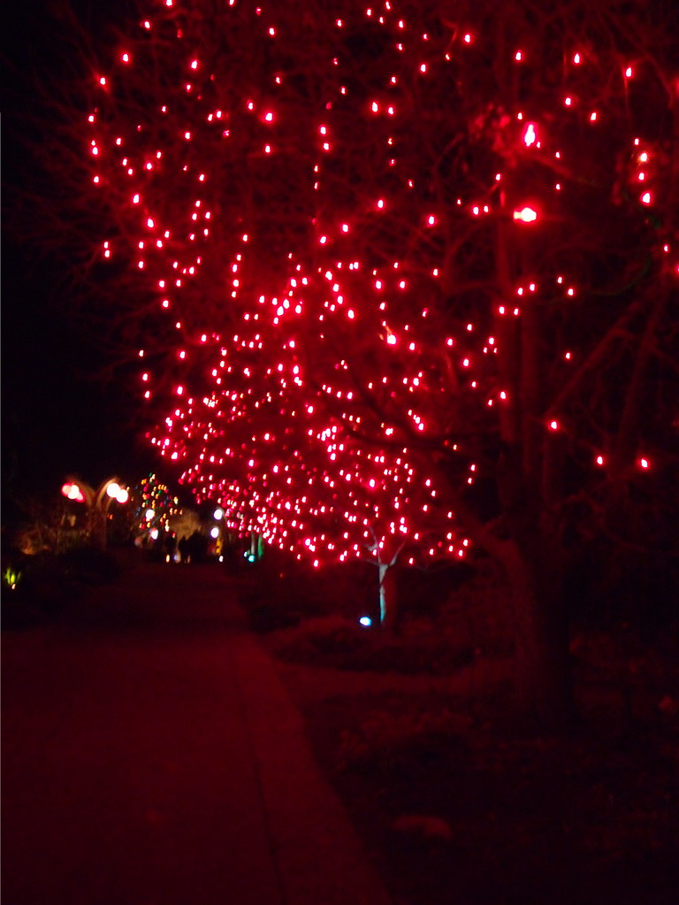 Red Trees Blossoms Of Light Denver Botanic Gardens