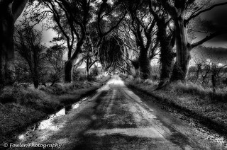 The Dark Hedges in Northern Ireland B/W | by Samuel Fowler