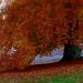 Ich liebe die Stille, unterbrochen von den leisen Geräuschen der Natur und die Musik der fallenden Blätter :-))