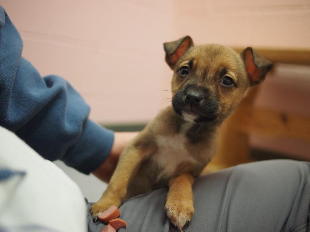 Image Result For Gentle Dog Training