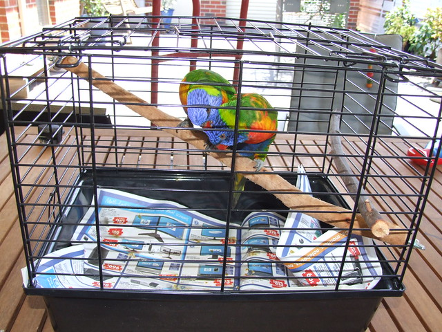 Car Dog Cages For Sale