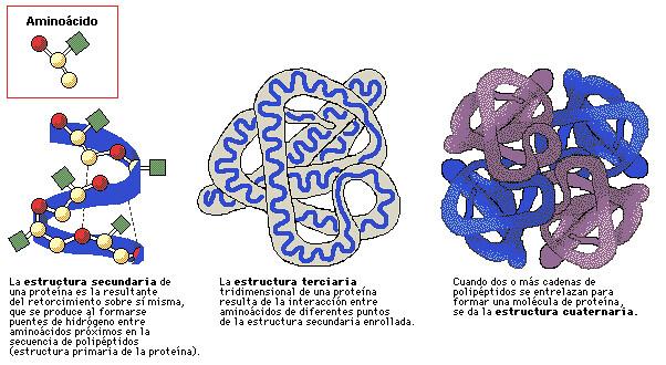 Estru Proteinas Parte De Los Carbohidratos Andrés Felipe