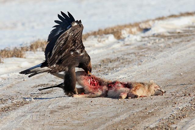 Dog Eats Pet Bird