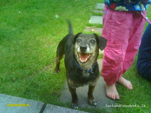 Ardmore Dog Park