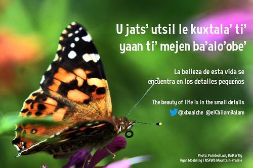 U jats' utsil le kuxtala' ti' yaan ti' mejen ba'alo'obe' = La belleza de esta vida se encuentra en los detalles pequeños = The beauty of life is in the small details @xbaalch @elChilamBalam