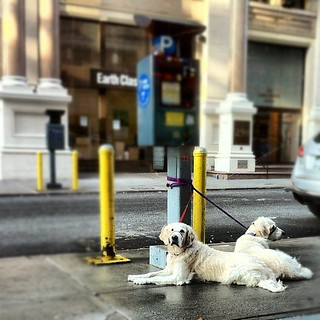 Frisket and Sailor at the Caffín Agile | by epc