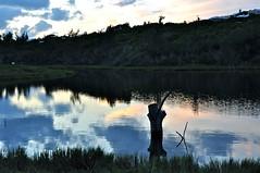Spittal Pond Nature Reserve