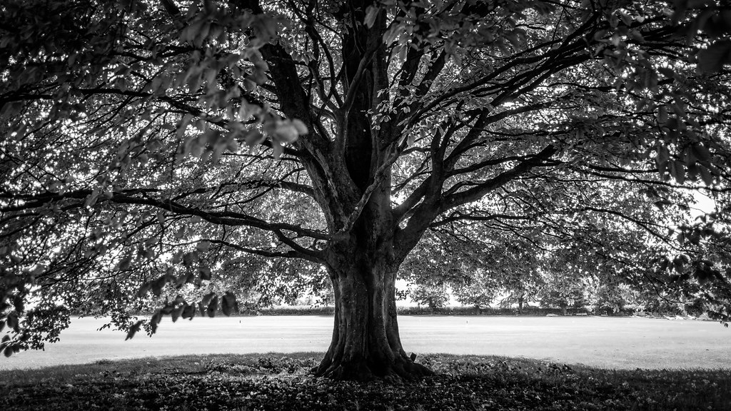 the tree avebury united kingdom black and white photo flickr. Black Bedroom Furniture Sets. Home Design Ideas