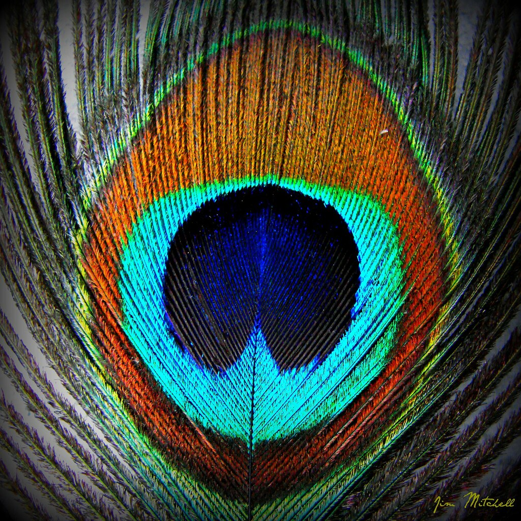 Peacock Feathers Quotes Peacock Feather | Flickr