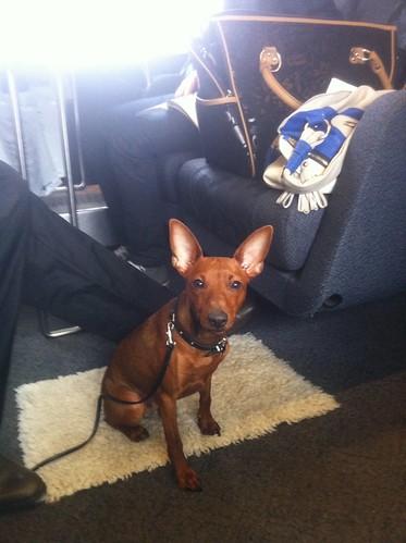 Image Result For Pro Train Dog