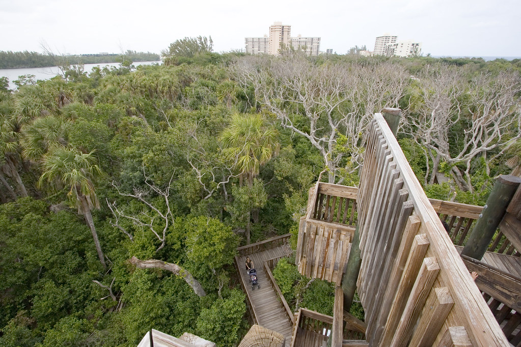 Gumbo Limbo Nature Center | A bird's-eye view from atop ...