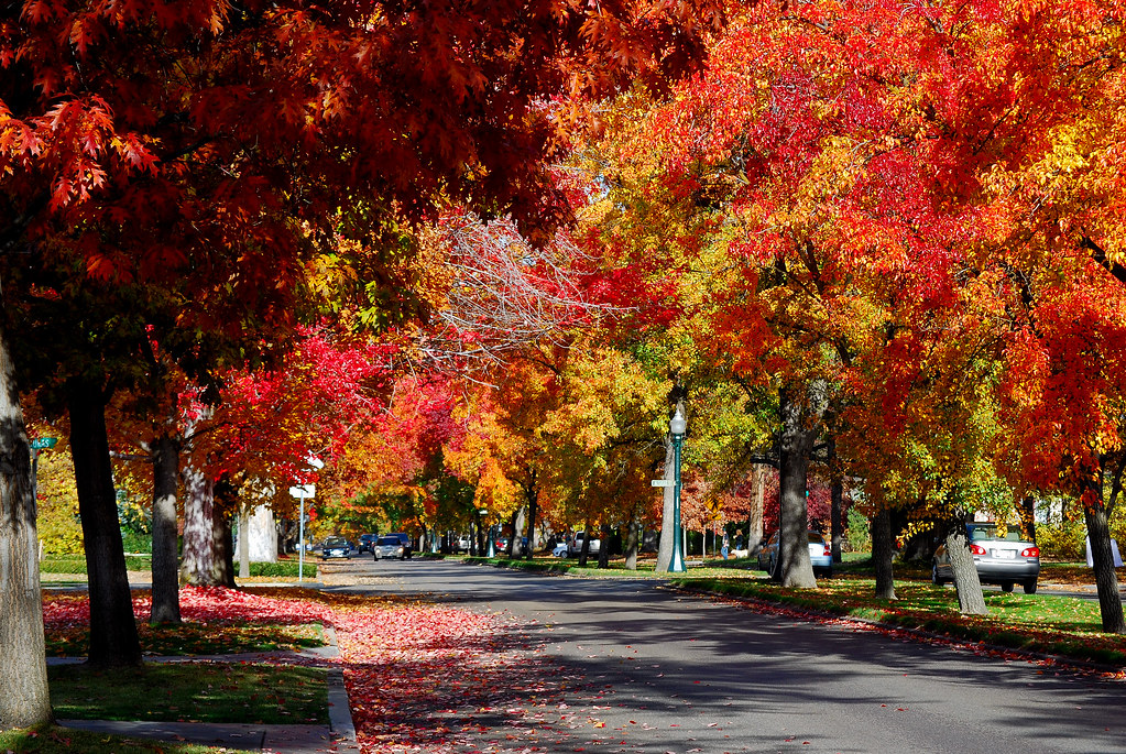 Autumn Colors In Boise Boise S North End Neighborhood In