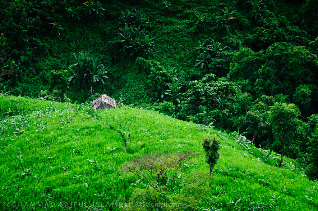Green Heaven | Richang Jhorna, Khagrachari, CHT, Bangladesh