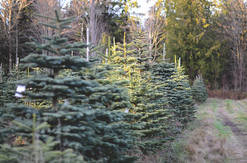 "Foto ""Christmas Tree Farm"" by camerabee - flickr"