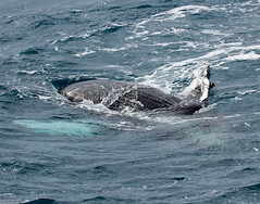 seals-orcas-whales-dolphins-19