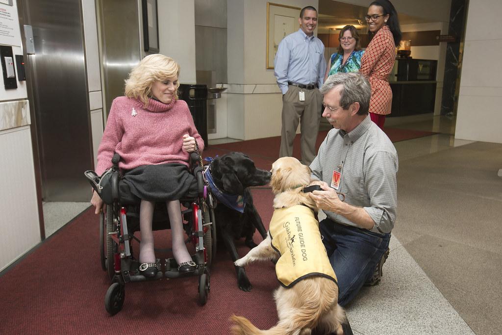 Image Result For Blind Dog Training