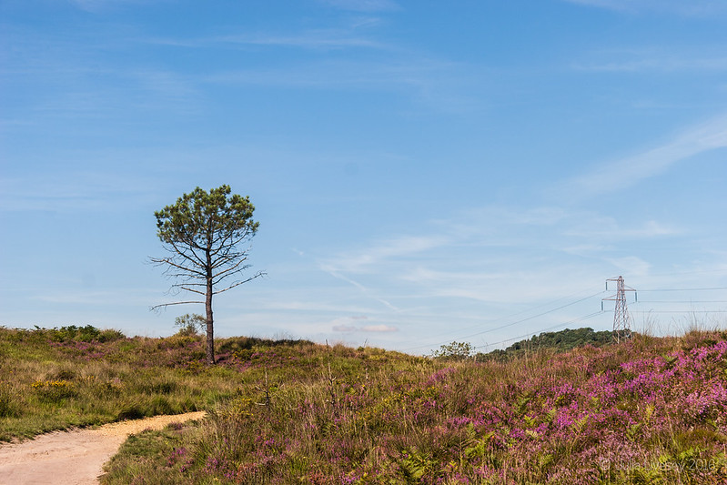 A sunny morning on Upton Heath